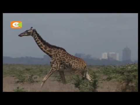 Conservationists protest SGR route passage through Nairobi Park