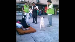 DOGS PROTECT HOMELESS GUY