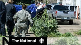 Black market for pot growing despite legalization in Colorado