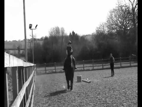 Xxx Mp4 Dublin The Horse That Stole My Heart Xx 3gp Sex