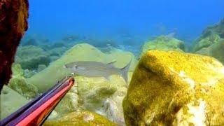 Pescasub: A cefali col culo fuori dall'acqua