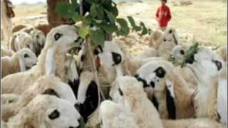 goat markeet ...pckg by FAZAL QADEER
