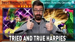 Tried and True Harpies!   YuGiOh Duel Links Mobile & Steam w/ ShadyPenguinn