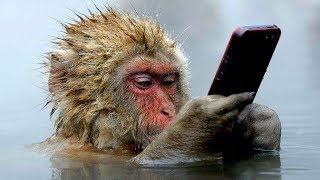 أذكى القرود فى العالم , هل ستسيطر يوما ما على العالم .. ؟؟!