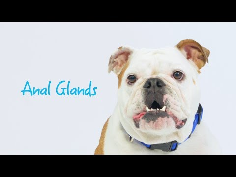 Xxx Mp4 Maintaining Healthy Anal Glands In Dogs Cats With Glandex 3gp Sex
