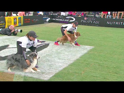 30 Weave Up & Back Competition 2016 Purina® Pro Plan® Incredible Dog Challenge® Western Regionals