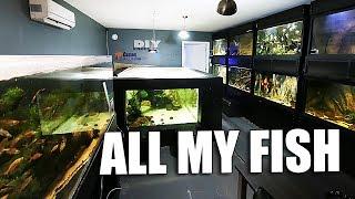 All my aquariums tour