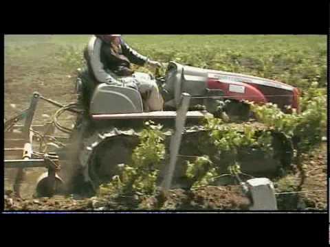 massey ferguson 80 cv coltivando i vigneti.