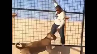 Lucu cara orang arab ngerjain orang dengan singa
