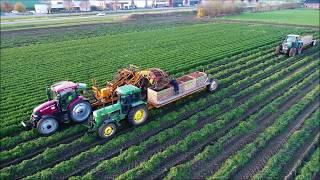 Wortels rooien / Harvesting Carrots / Möhren Ernte / RVL Vecon / John Deere / Fendt / Case IH