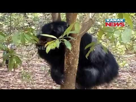 Xxx Mp4 Bear Stuck In Tree People Started Taking Selfie With Bear 3gp Sex