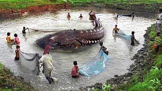 7اسماك مفترسة تسكن نهر الامازون لم تري مثلها من قبل