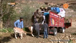 Türkmen Aşireti Rişvanlar Yayla Yolculuğuna Böyle Çıkıyor - TRT Avaz