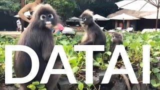 Honeymoon in the Datai, Langkawi Malaysia 2017 - Gopro Hero5