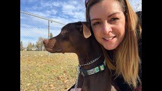 Wisdom Panel dog DNA test kit review