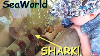 BIT BY SHARK AT SEAWORLD! 🐋🐳🐬🐢