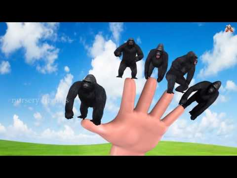 Finger Family || KING KONG V/S TIGER version || Nursery Rhymes and Baby Songs