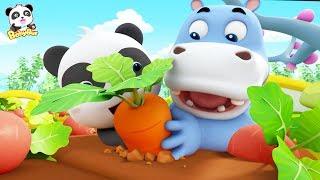 奇奇抓住了會跑的蘿蔔!快來一起看看神奇的蘿蔔! | 兒歌 | 童謠 | 奇妙漢字動畫 | 卡通 | 寶寶巴士 | 奇奇 | 妙妙