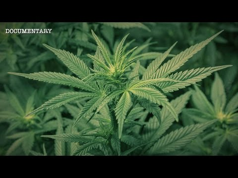 The Most Powerful Plant on Earth? | The Hemp Conspiracy | Documentary