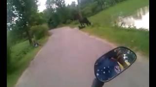Beautiful villege road of Nalitabari