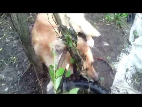 Xxx Mp4 ЖЕСТЬ Спасение Собаки от первого лица 3gp Sex