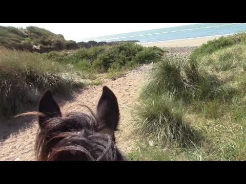 Xxx Mp4 One Woman And A Horse Riding Along The South Wexford Coast – Part One 3gp Sex