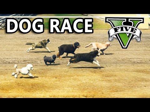 GTA V - Dog Race