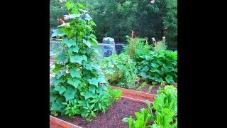 Tips On Growing Cucumbers On A Trellis ~ Quick Garden Update