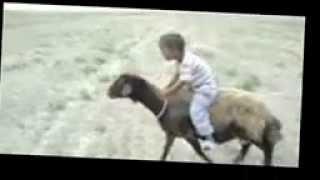 بچه ترکمن گوسفندسوار