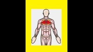 Fliegende mit KURZHANTELN für die Brustmuskulatur + mehr VOLUMEN