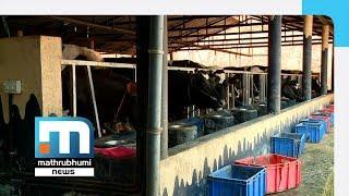 Rasheed Milks Success From Dairy Farms| Mathrubhumi News
