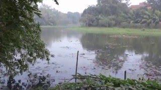 Jahangirnagar University (জাহাঙ্গীরনগর বিশ্ববিদ্যালয়)-  অতিথী পাখি