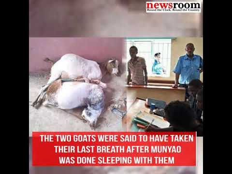 Man Arrested For Raping Goats to death