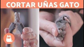 ¿Cómo cortarle las uñas a un gato? 🐱 PASO A PASO FÁCIL