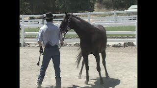 Leading Manners With The Pushy Horse, Mike Hughes, Auburn California