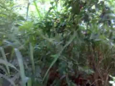Gnomo aparece em Goianápolis