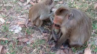 Kidnap Baby Monkey