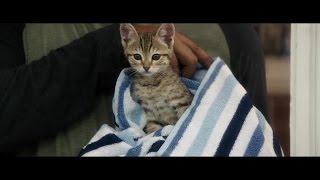 'Keanu' Official Trailer (2016) HD