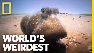 Fish Battle on Land | World's Weirdest