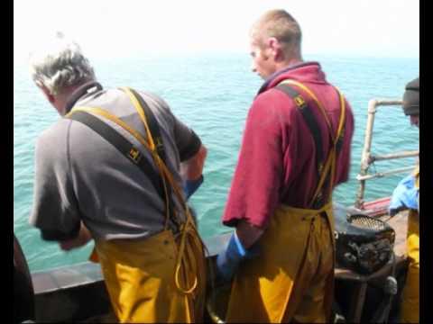 Whelk fishing.wmv