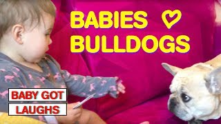 Babies Love Bulldogs!! | The Cutest Baby and Pet Compilation