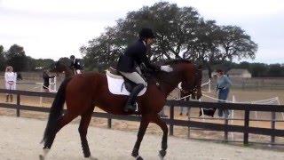 Hot Shot Hank BN show jumping at Rocking Horse Winter I