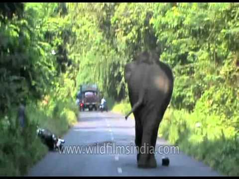 Elephant attack in West Bengal, India