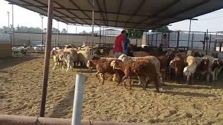 Eid al Adha 2016/ Dammam Saudi Arabia                         عيد الأضحى
