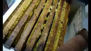 Recolte artisanale de miel a LONGVIC, juillet 2008