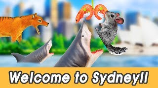 [EN] #98 Welcome to Sydney!! kids English education, Animal movie, learn animals nameㅣCoCosToy