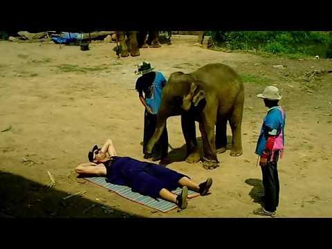 /////ELEPHANT VICIEUX CHANG MAI THAILANDE./////
