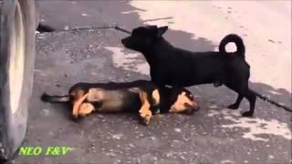 dog save friend
