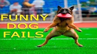 Funny Dogs - Funny Dog Fails - Funny Dogs Compilation - Funny Animals Compilation