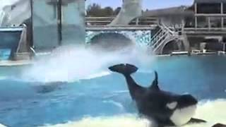 نمایش بازی نهنگ ها